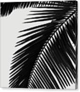Palm Leaves Bw Canvas Print