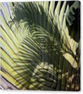 Palm On Palm Canvas Print