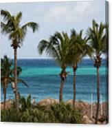 Palm On The Beach Canvas Print
