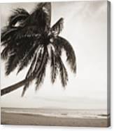 Palm Over Beach Canvas Print