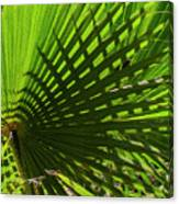 Palm Pattern No.1 Canvas Print