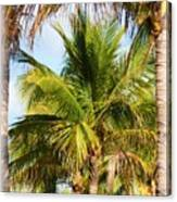 Palm Portrait Canvas Print