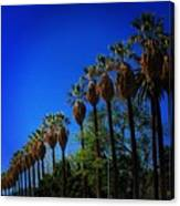 Palm Row Canvas Print