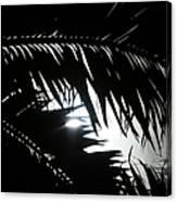 Palm Silhouettes Kaanapali Canvas Print