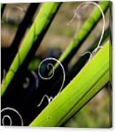 Palm Strings Canvas Print