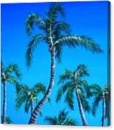 Palm Tops Canvas Print