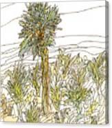 Palm Tree 1 Canvas Print