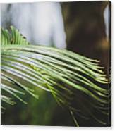 Palm Tree 5 Canvas Print