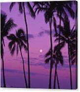 Palm Tree And Moon Canvas Print