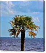 Palm Tree By The Lake Canvas Print