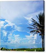 Palm Tree Dream Delray Beach Florida Canvas Print