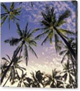 Palm Tree Grove Canvas Print