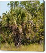 Palm Tree In Golden Grass Canvas Print