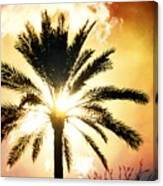 Palm Tree In The Sun #2 Canvas Print
