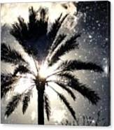 Palm Tree In The Sun #3 Canvas Print