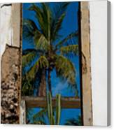 Palm Tree In The Window Canvas Print
