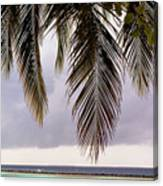 Palm Tree Leaves At The Beach Canvas Print