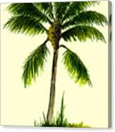 Palm Tree Number 1 Canvas Print