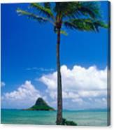 Palm Tree On The Beach Kaneohe Bay Oahu Hawaii Canvas Print
