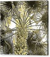 Palm Tree Pen And Ink Grayscale With Sepia Tones Canvas Print