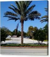 Palm Tree Psl. Canvas Print