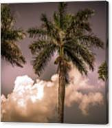 Palm Trees Against Beautiful Sky Canvas Print