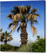 Palm Trees Growing Along The Beach Canvas Print