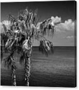 Palm Trees In Black And White At Laguna Beach Canvas Print