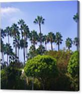 Palm Trees. My Beautiful California Canvas Print