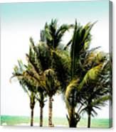 Palm Trees Ocean Breeze Canvas Print