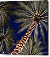 Palm Trees Wrapped In Lights Canvas Print