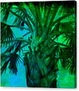 Palm Visions Canvas Print