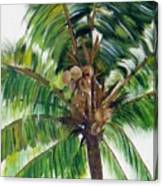 Palma Tropical Canvas Print