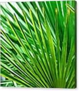 Palms 2 Canvas Print