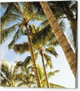 Palms Against Blue Sky Canvas Print