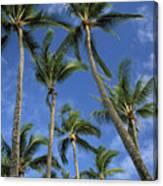 Palms And Blue Sky Canvas Print