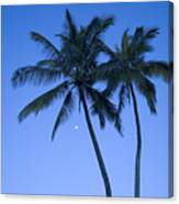 Palms And Blue Sky Canvas Print