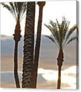 Palms And Light Canvas Print