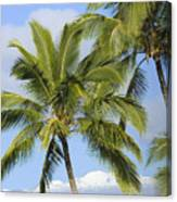 Palms And Mountaintops Canvas Print