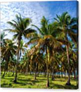 Palms And Sky Canvas Print