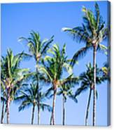 Palms In Living Harmony Canvas Print