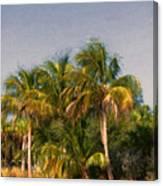 Palms - Naples Florida Canvas Print