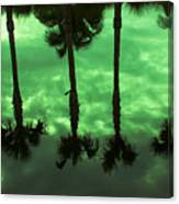 Palms Of Florida Canvas Print