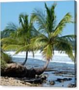 Palms On Ocean Canvas Print