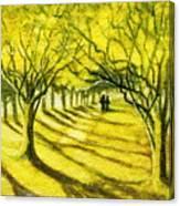 Palo Verde Pathway Canvas Print