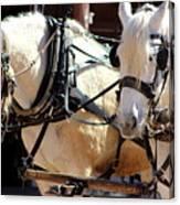 Palomino Horses Canvas Print