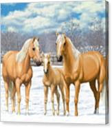 Palomino Horses In Winter Pasture Canvas Print
