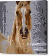 Palomino In The Snow Canvas Print