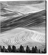 Palouse Field 2740 Canvas Print