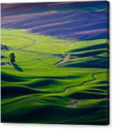 Palouse - Later Afternoon Canvas Print